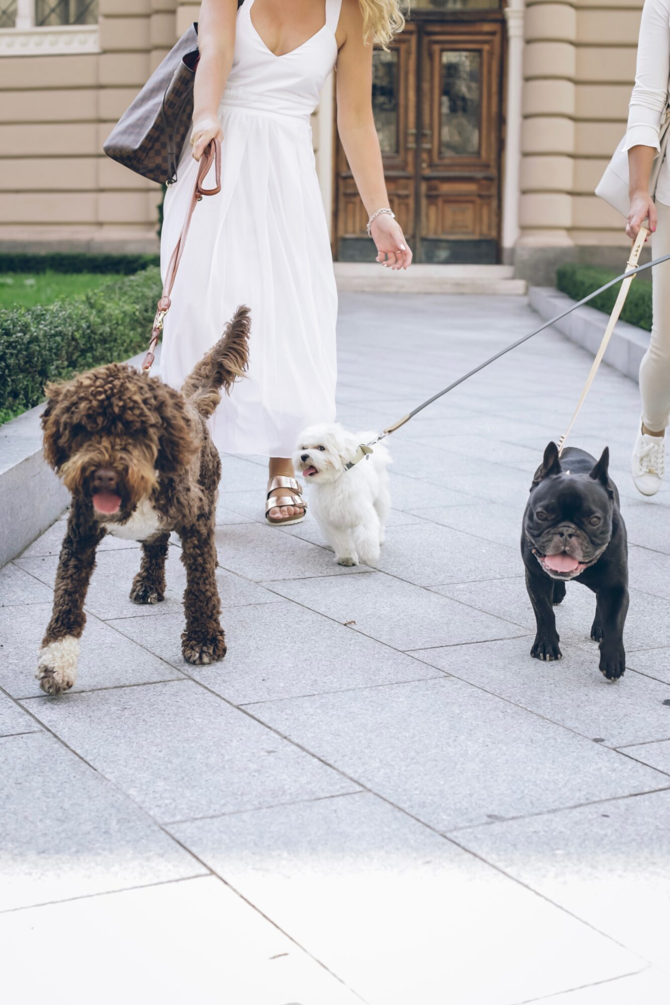 Gå behagelige ture med en din hund i hundesnor